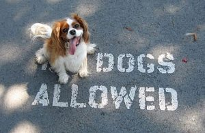 funny cute no dogs allowed